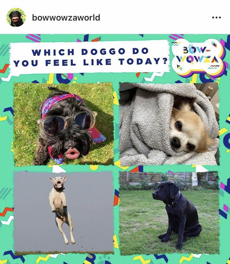Bow-Wowza on Instagram
